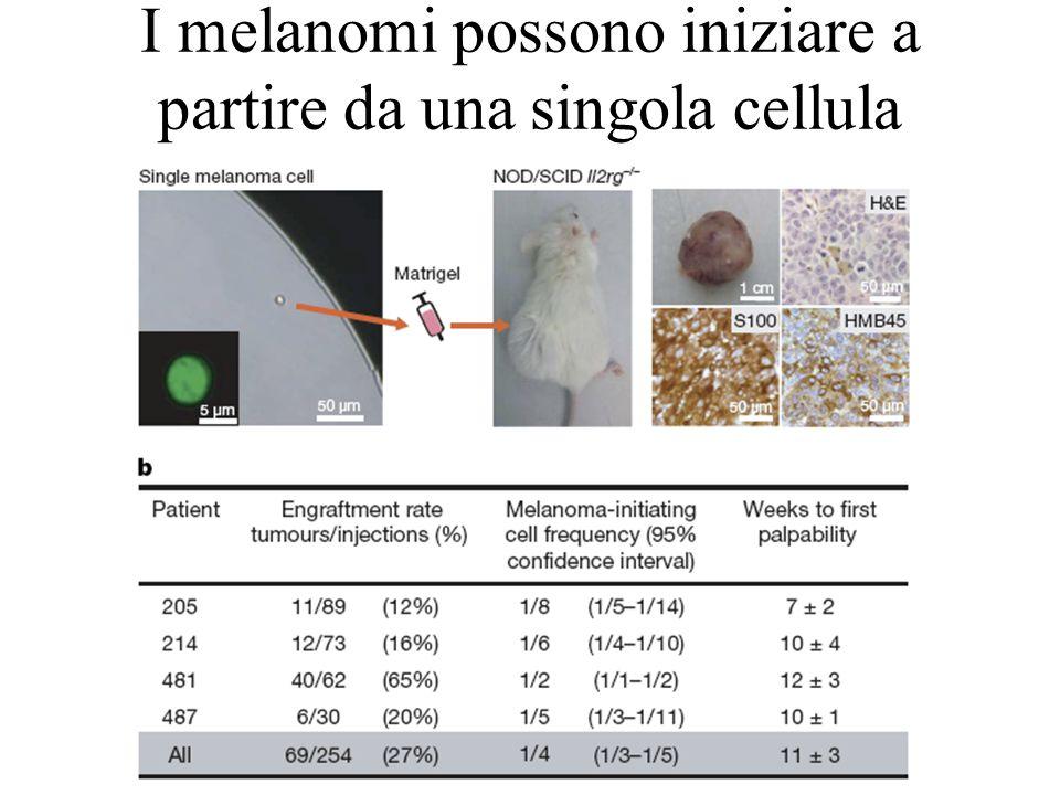 I melanomi possono iniziare a partire da una singola cellula