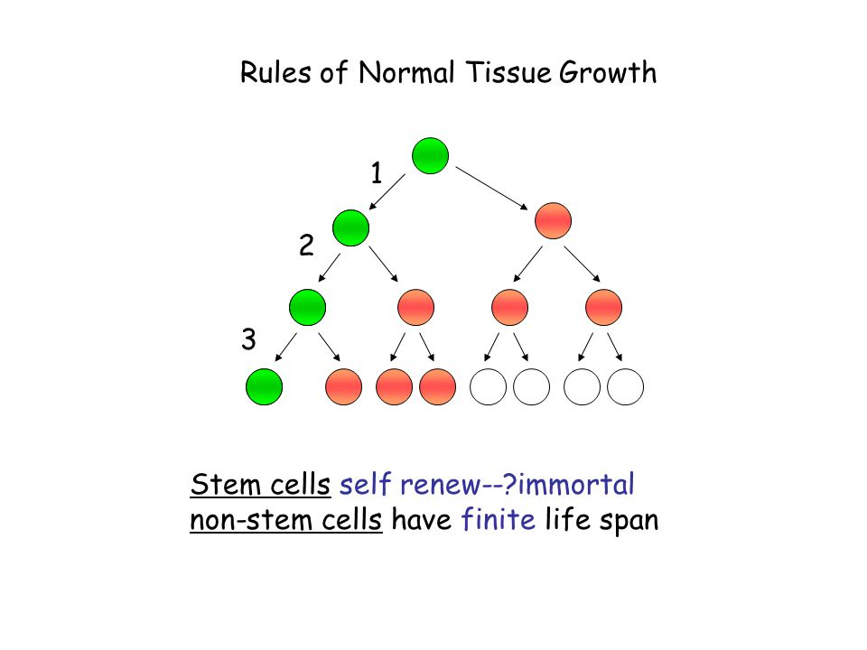 Rules of Normal Tissue Growth
