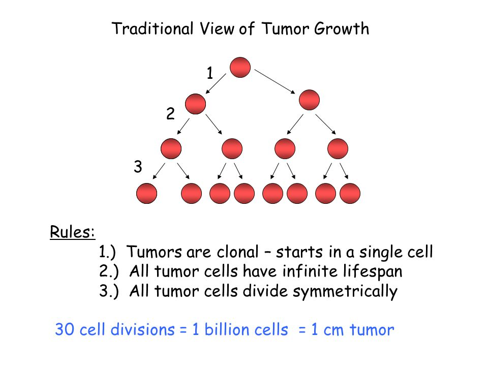 Traditional View of Tumor Growth