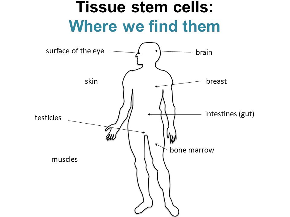 Tissue stem cells: Where we find them