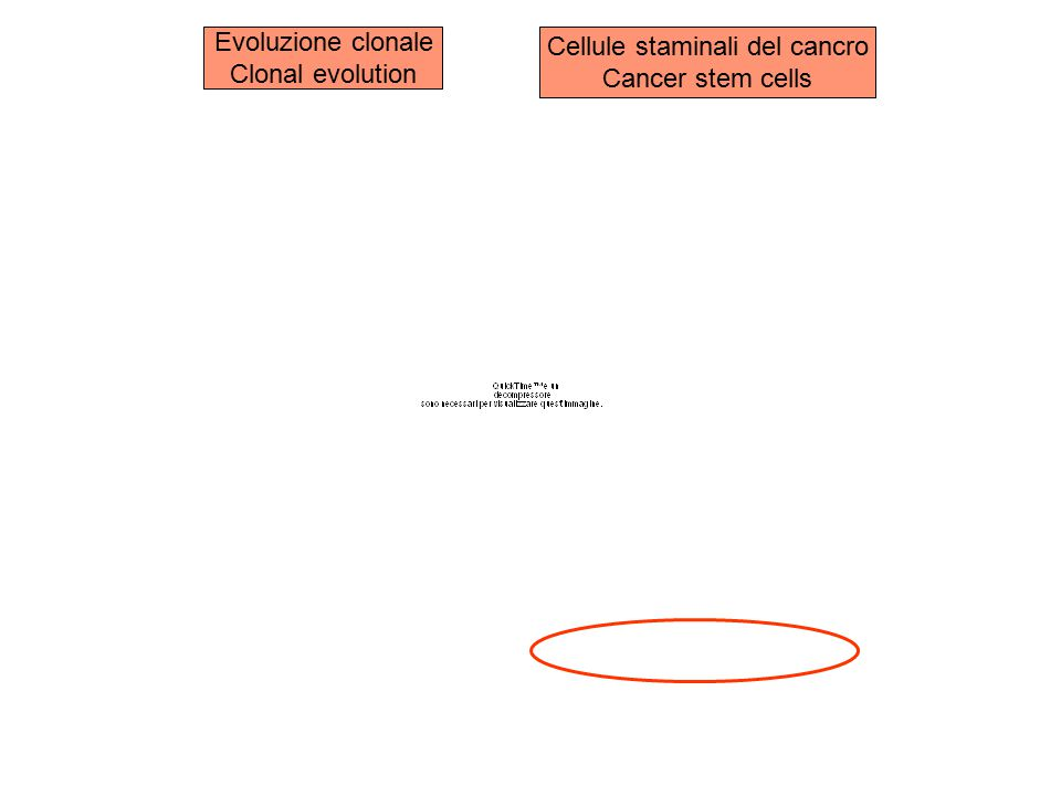 Cellule staminali del cancro
