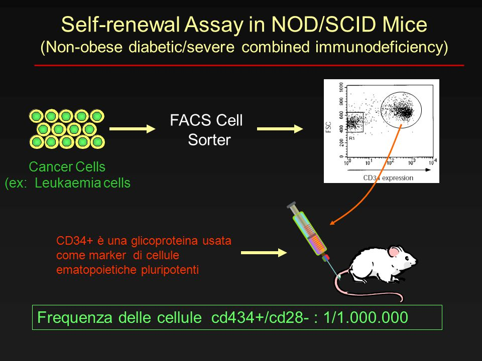 Self-renewal Assay in NOD/SCID Mice