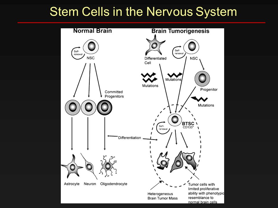 Stem Cells in the Nervous System