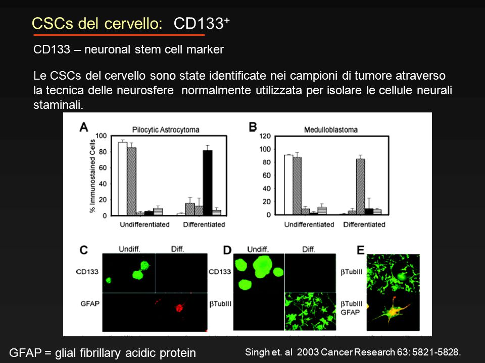 CSCs del cervello: CD133+ CD133 – neuronal stem cell marker