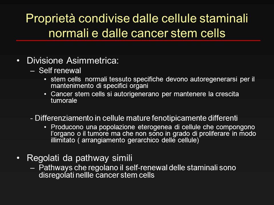 Proprietà condivise dalle cellule staminali normali e dalle cancer stem cells