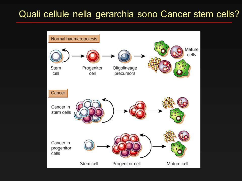 Quali cellule nella gerarchia sono Cancer stem cells