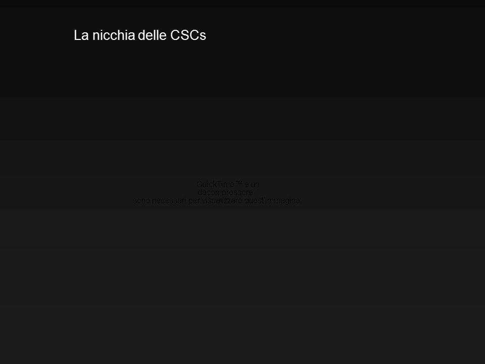 La nicchia delle CSCs