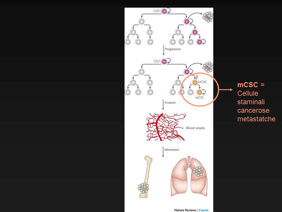mCSC = Cellule staminali cancerose metastatche