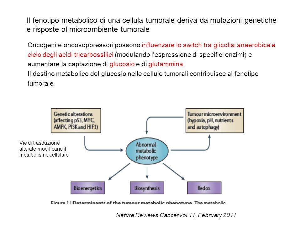 e risposte al microambiente tumorale