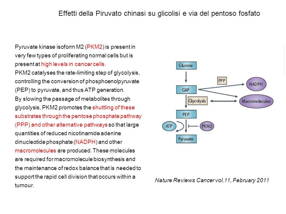 Effetti della Piruvato chinasi su glicolisi e via del pentoso fosfato