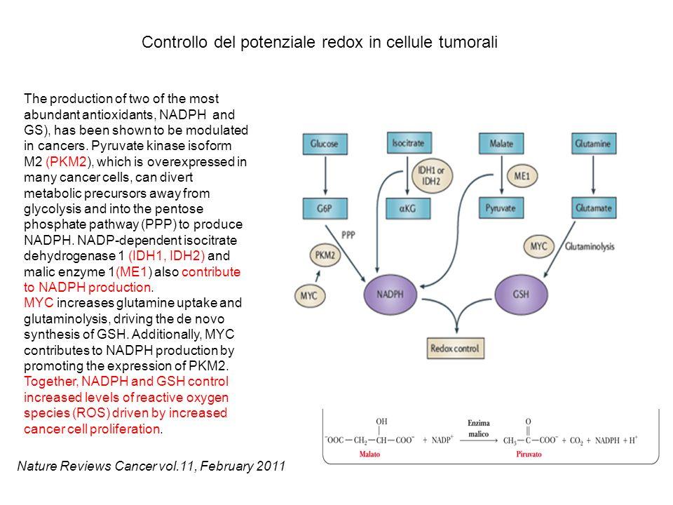 Controllo del potenziale redox in cellule tumorali