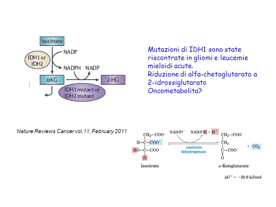 Riduzione di alfa-chetoglutarato a 2-idrossiglutarato Oncometabolita