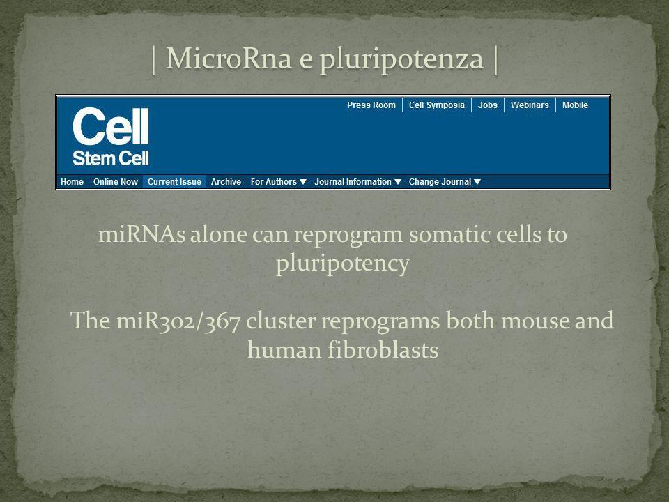 | MicroRna e pluripotenza |