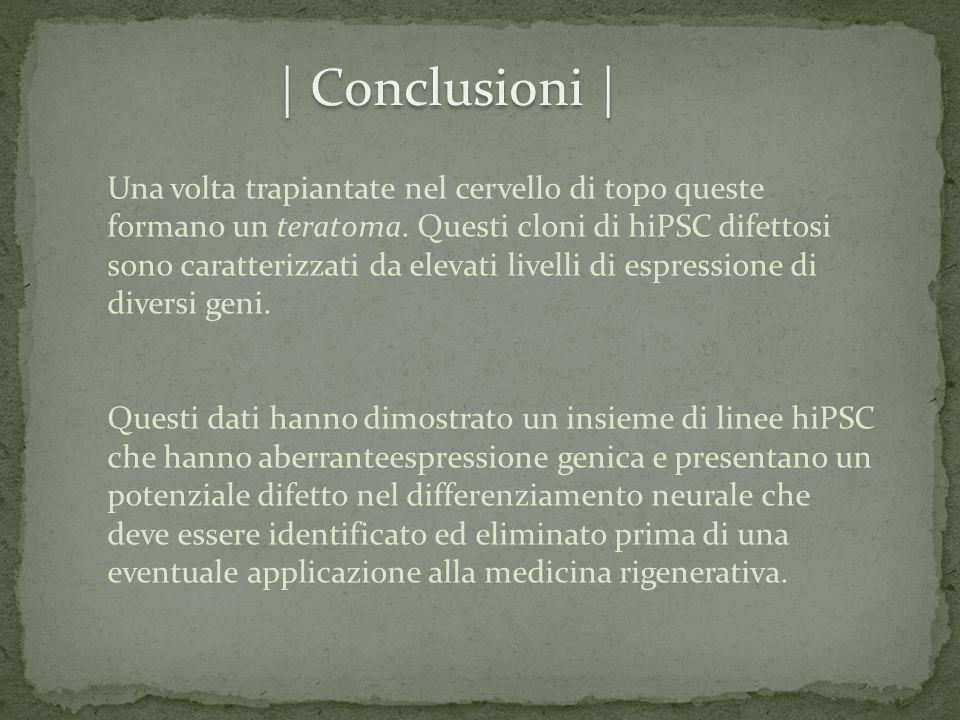 | Conclusioni |