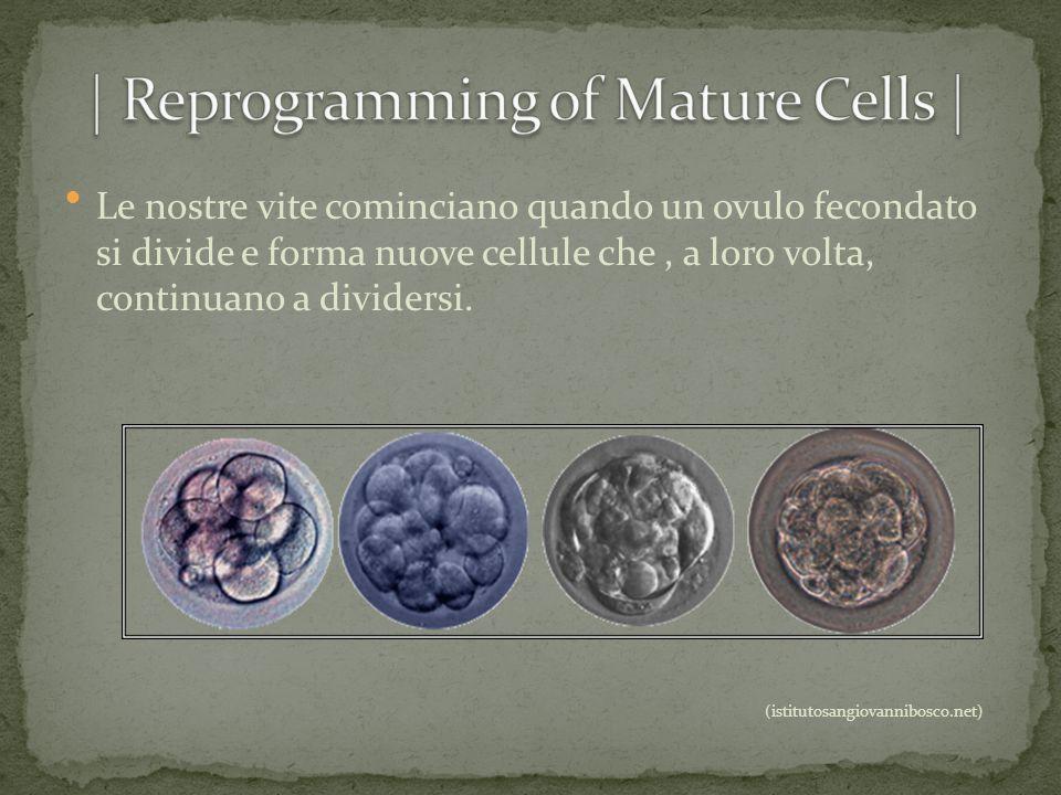 | Reprogramming of Mature Cells |