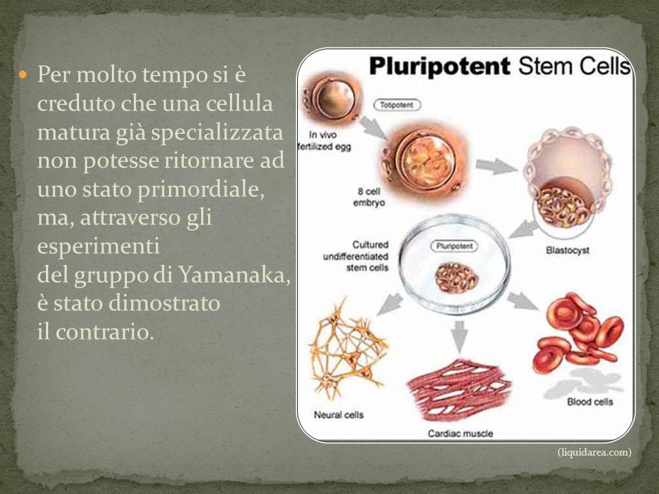 Per molto tempo si è creduto che una cellula matura già specializzata non potesse ritornare ad uno stato primordiale, ma, attraverso gli esperimenti del gruppo di Yamanaka, è stato dimostrato il contrario.