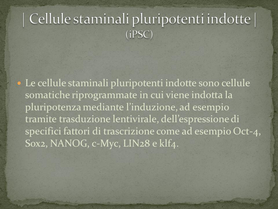 | Cellule staminali pluripotenti indotte | (iPSC)