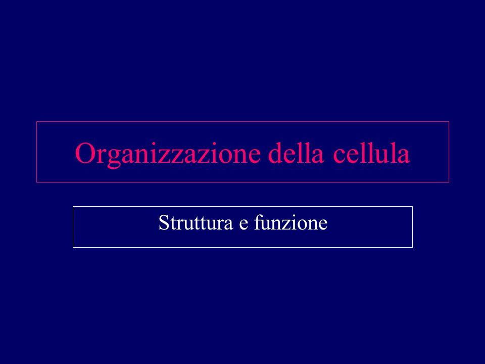 Organizzazione della cellula