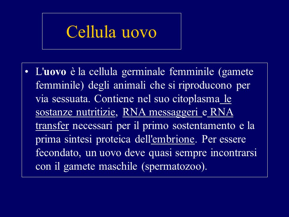 Cellula uovo