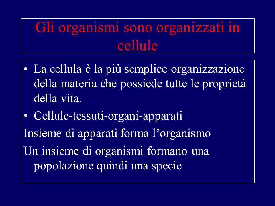 Gli organismi sono organizzati in cellule