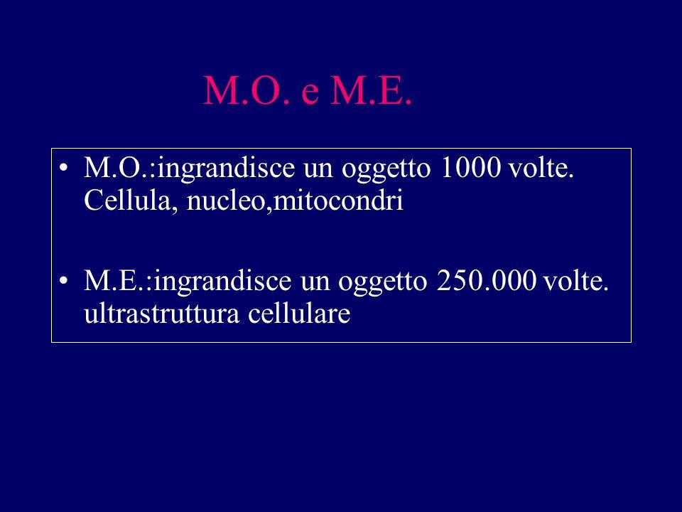 M.O. e M.E. M.O.:ingrandisce un oggetto 1000 volte.