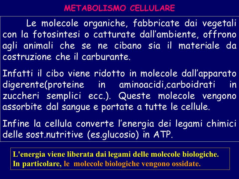 METABOLISMO CELLULARE