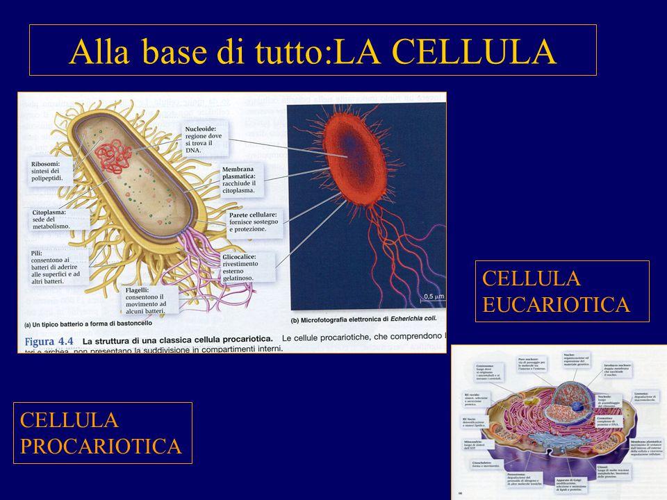 Alla base di tutto:LA CELLULA