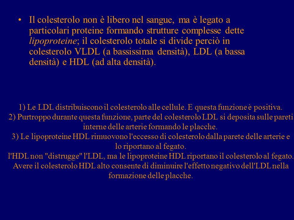 Il colesterolo non è libero nel sangue, ma è legato a particolari proteine formando strutture complesse dette lipoproteine; il colesterolo totale si divide perciò in colesterolo VLDL (a bassissima densità), LDL (a bassa densità) e HDL (ad alta densità).