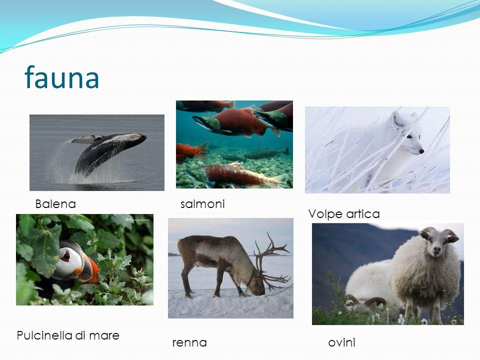 fauna Balena salmoni Volpe artica Pulcinella di mare renna ovini