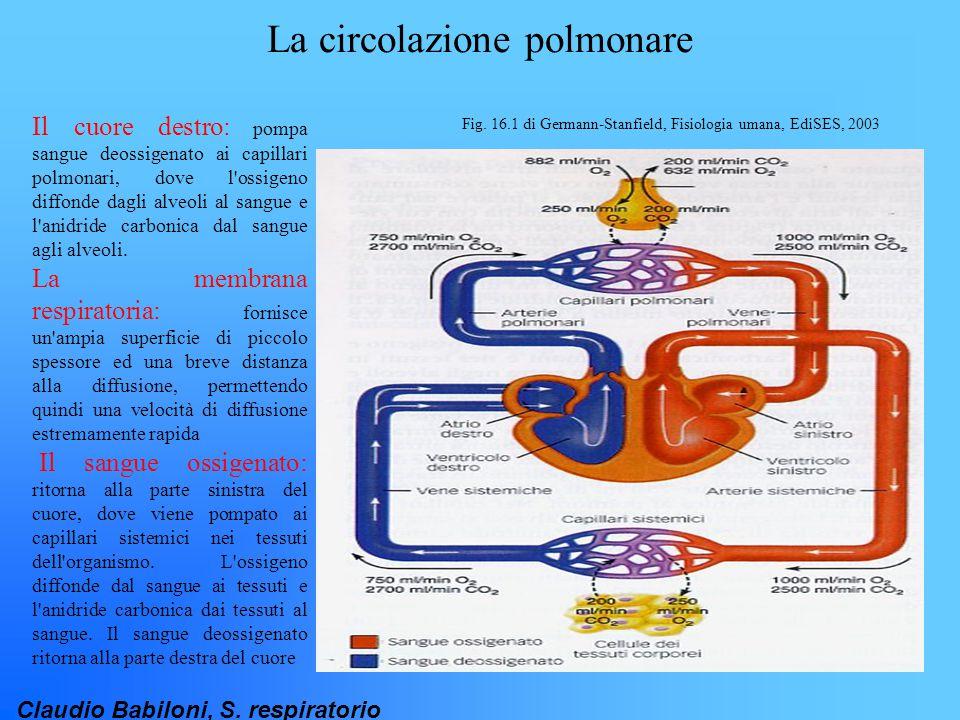 La circolazione polmonare