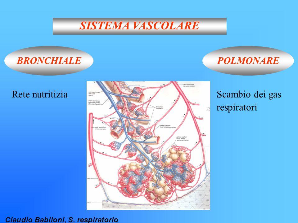 SISTEMA VASCOLARE BRONCHIALE POLMONARE Rete nutritizia Scambio dei gas