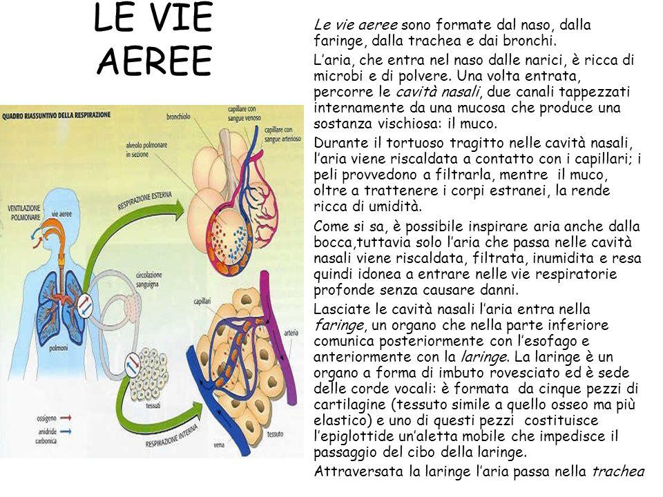 Le vie aeree sono formate dal naso, dalla faringe, dalla trachea e dai bronchi.