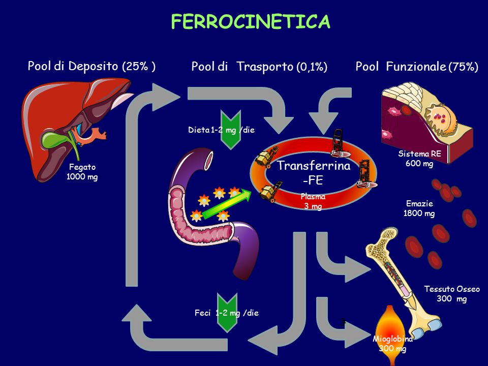 FERROCINETICA Pool di Deposito (25% ) Pool di Trasporto (0,1%)