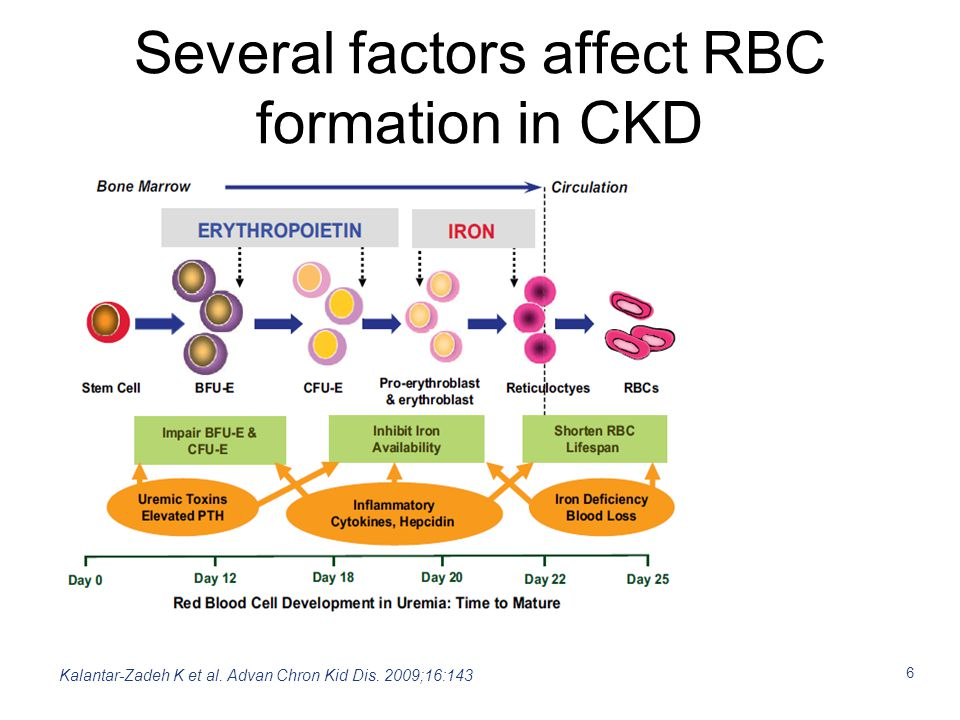 Several factors affect RBC formation in CKD