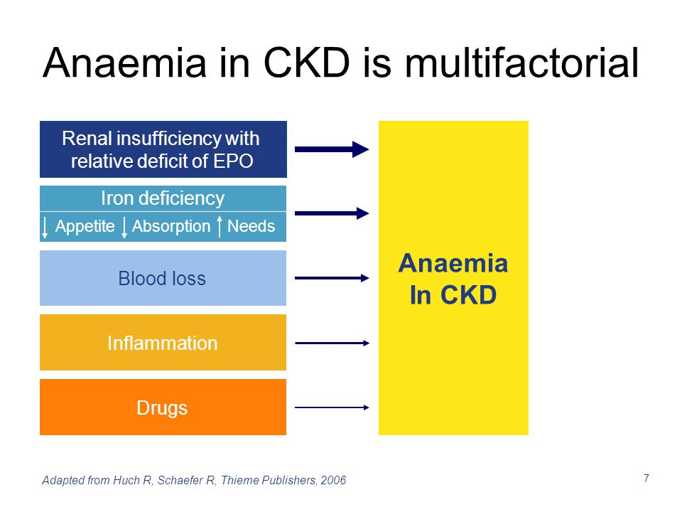 Anaemia in CKD is multifactorial