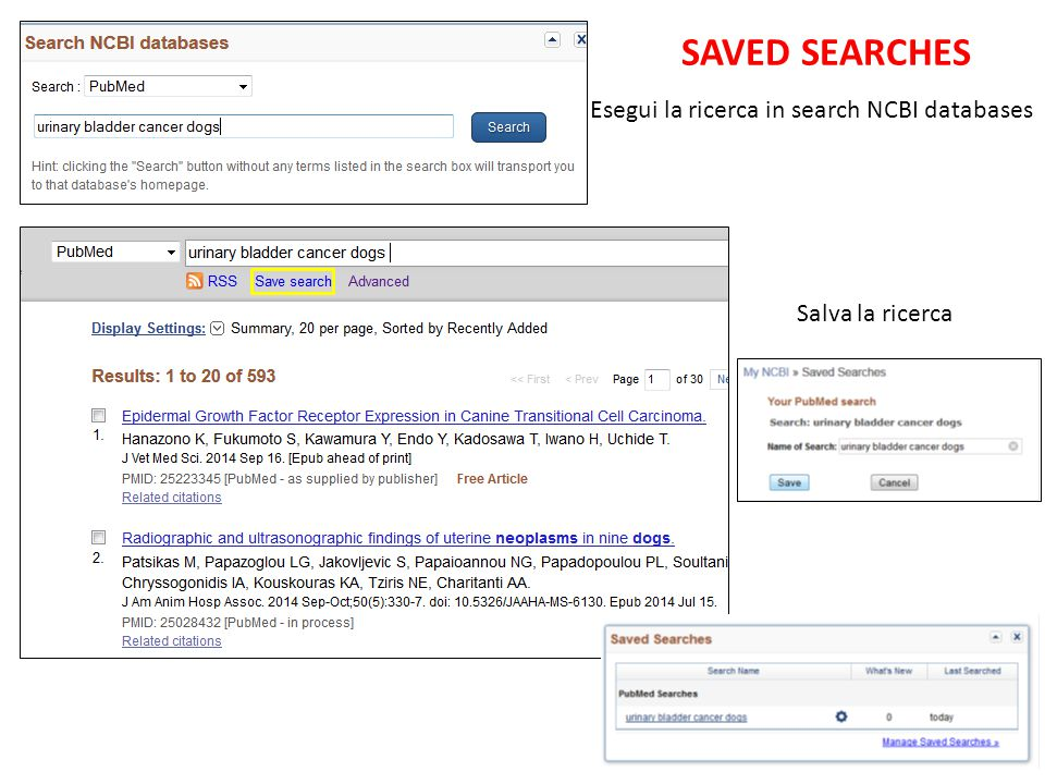SAVED SEARCHES Esegui la ricerca in search NCBI databases