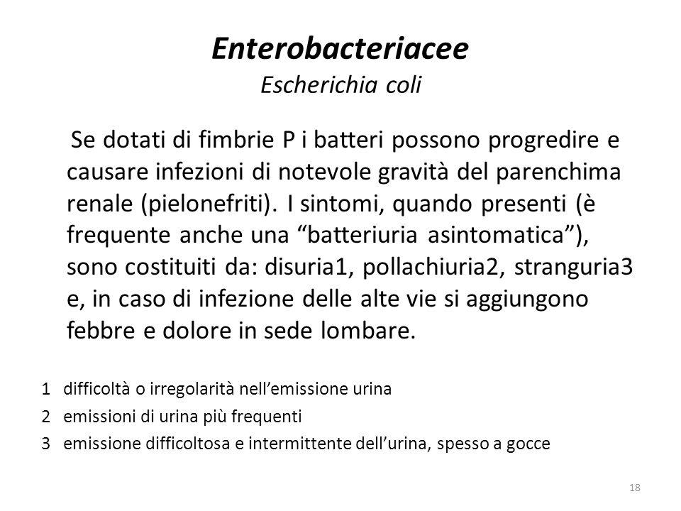 Enterobacteriacee Escherichia coli