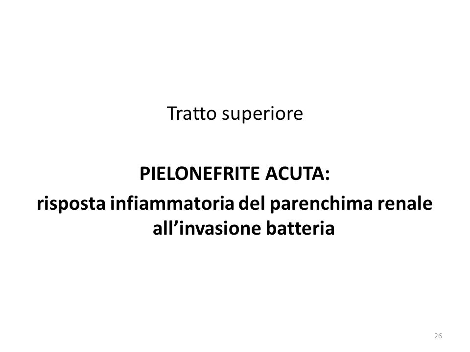 risposta infiammatoria del parenchima renale all'invasione batteria