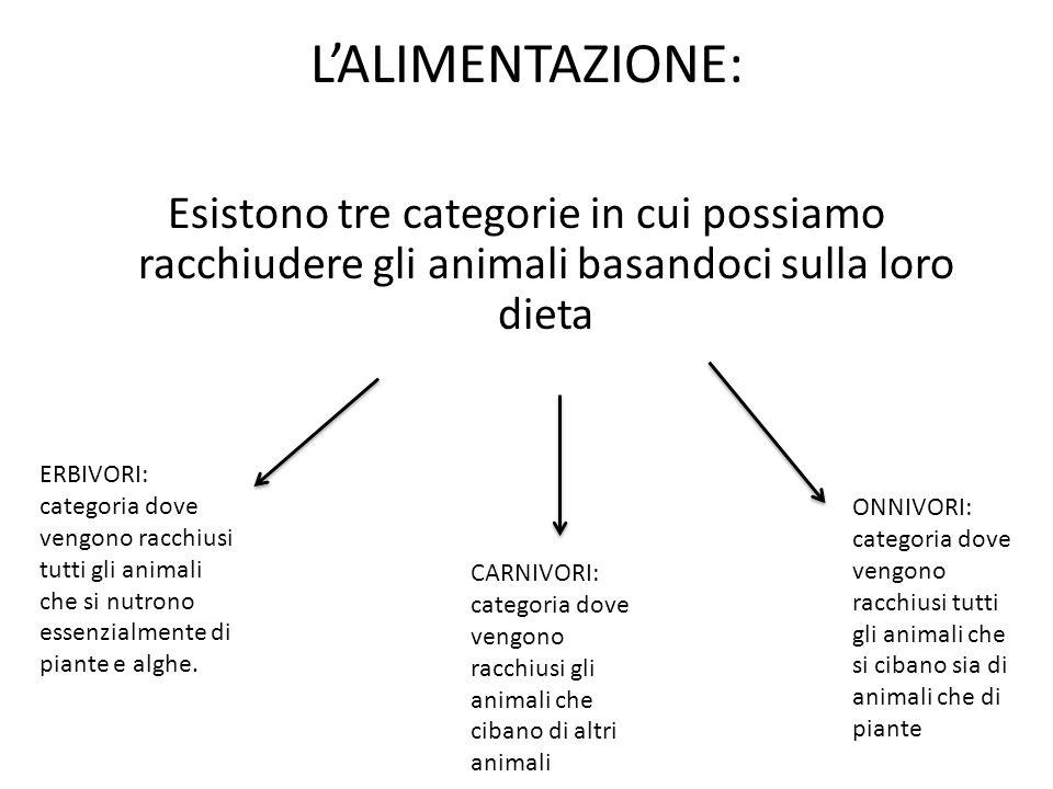 L'ALIMENTAZIONE: Esistono tre categorie in cui possiamo racchiudere gli animali basandoci sulla loro dieta.
