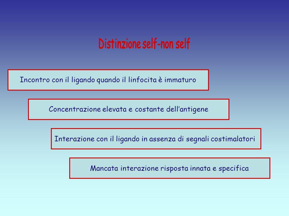 Distinzione self-non self