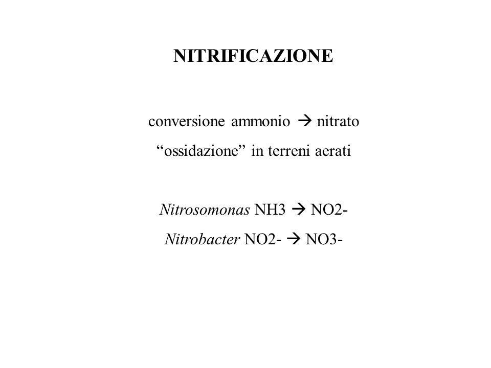 NITRIFICAZIONE conversione ammonio  nitrato