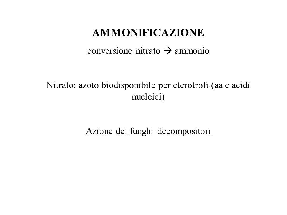 AMMONIFICAZIONE conversione nitrato  ammonio