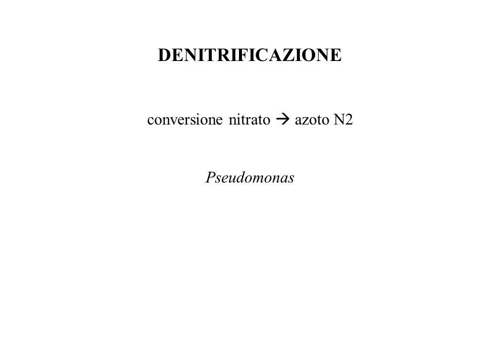 conversione nitrato  azoto N2