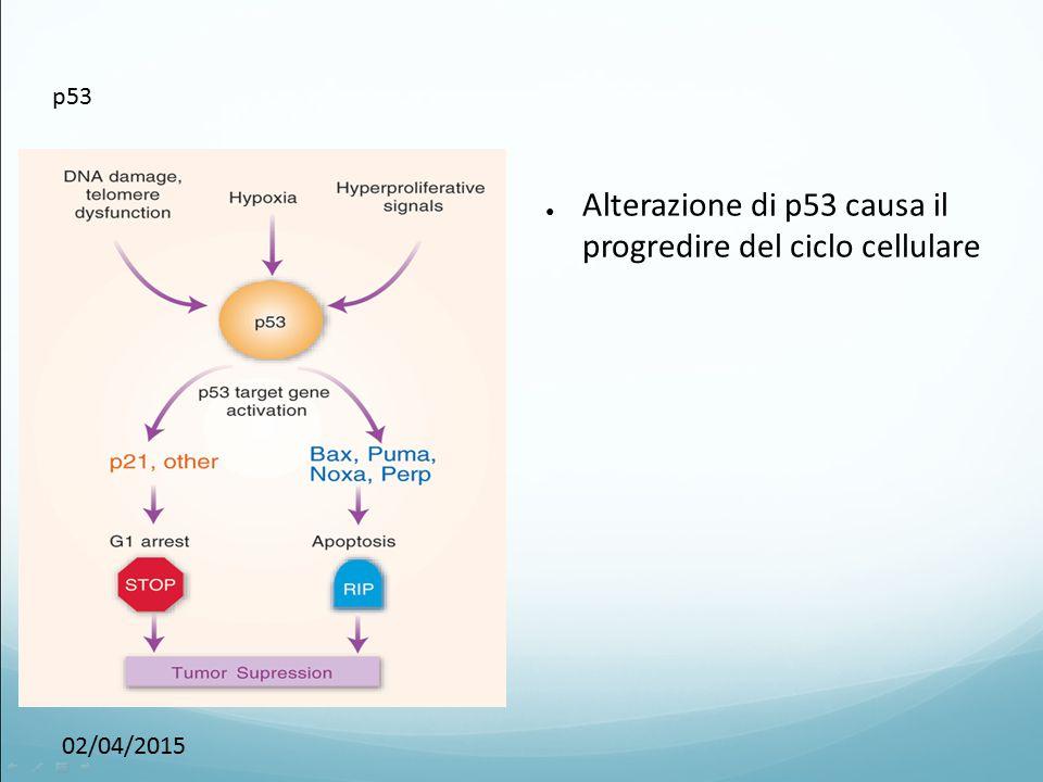 Alterazione di p53 causa il progredire del ciclo cellulare