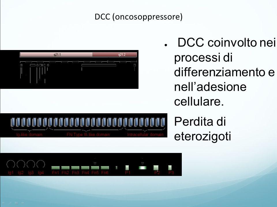 DCC (oncosoppressore)