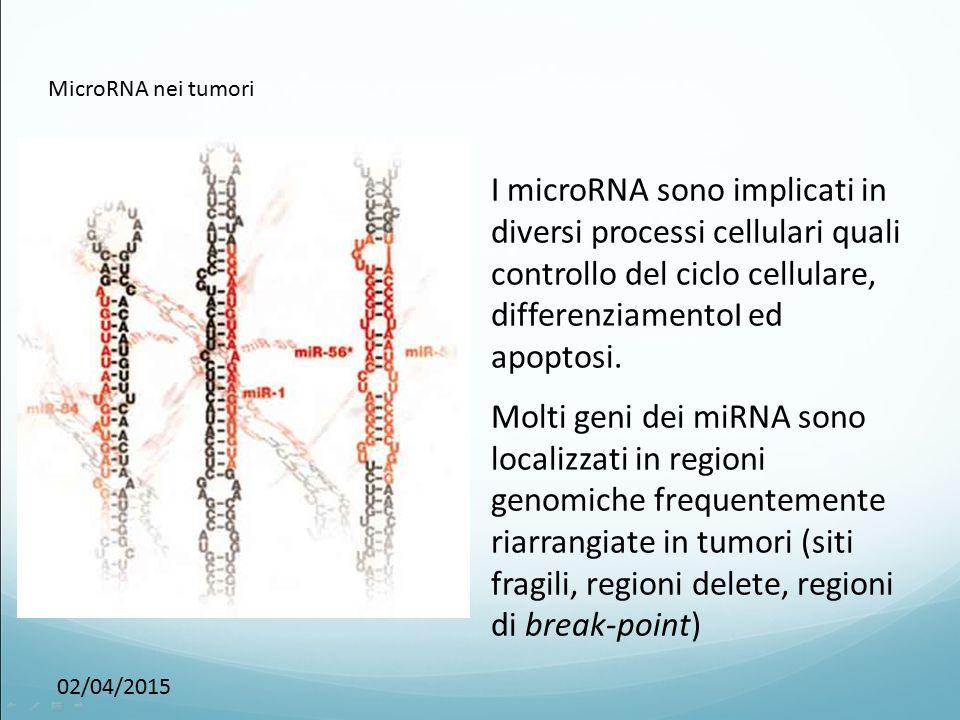 MicroRNA nei tumori I microRNA sono implicati in diversi processi cellulari quali controllo del ciclo cellulare, differenziamentoI ed apoptosi.