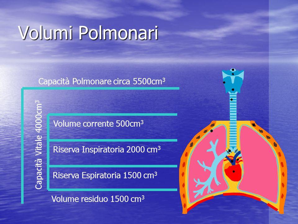 Volumi Polmonari Capacità Polmonare circa 5500cm3