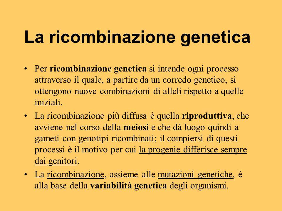 La ricombinazione genetica