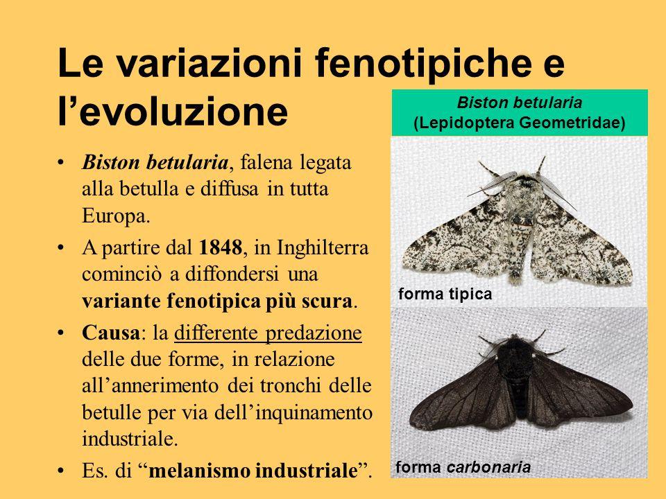 Le variazioni fenotipiche e l'evoluzione