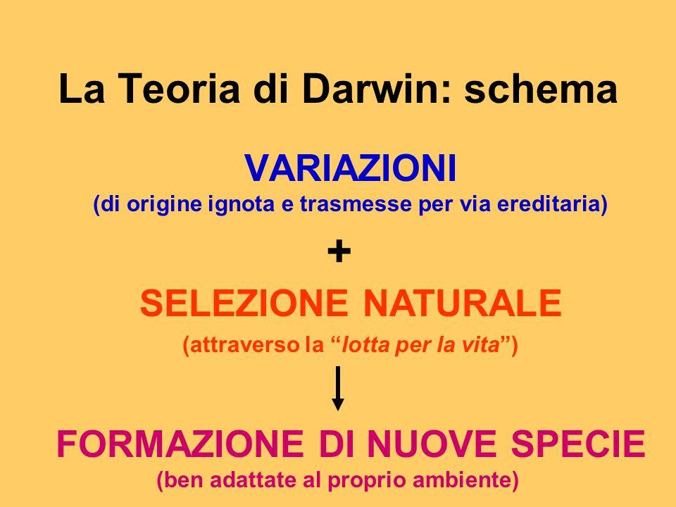 La Teoria di Darwin: schema